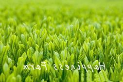 10Pcs Chinese <font><b>Green</b></font> <font><b>Tea</b></fo