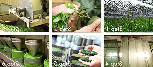 Matcha Tea - USDA -Natural & Focus Booster With )